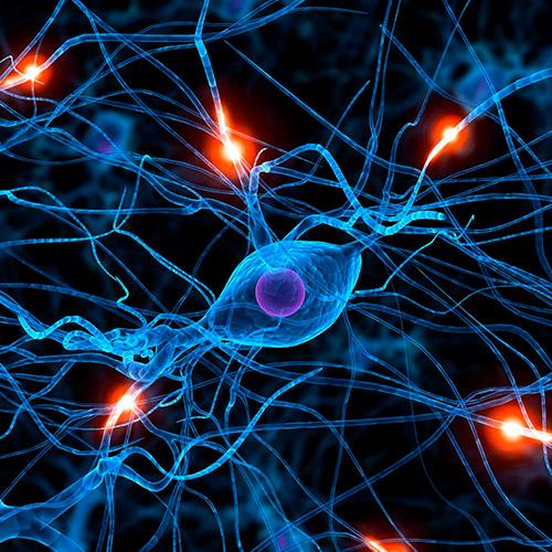 diseno web 3dneuroanatomy servicios medicos 04 500 - Diseño de páginas web Alicante: 3D Neuroanatomy